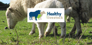 "Pro Ovine provide a wide range of services via the subsidised Healthy Livestock Initiative to farmers in England. <a href=""/contact-us/"">Contact us</a> today for details of how we can help your business."
